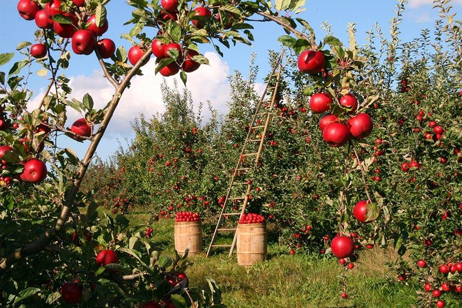 Apfel- und Birnensaft von der Natursaftkelterei Ott